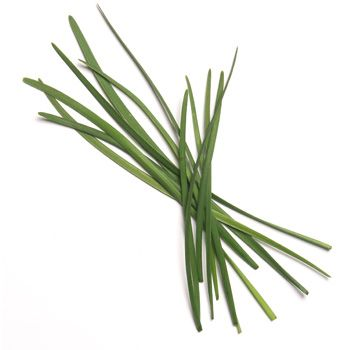 Garlic Chives/chinese Chives