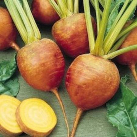 Beetroot Gold Large