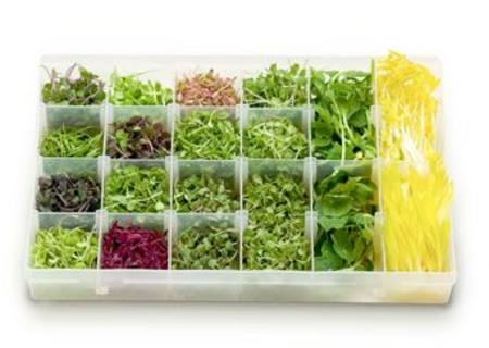 Microgreen Roquette 50gm PNT