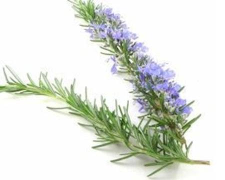 Rosemary 100GM Pack