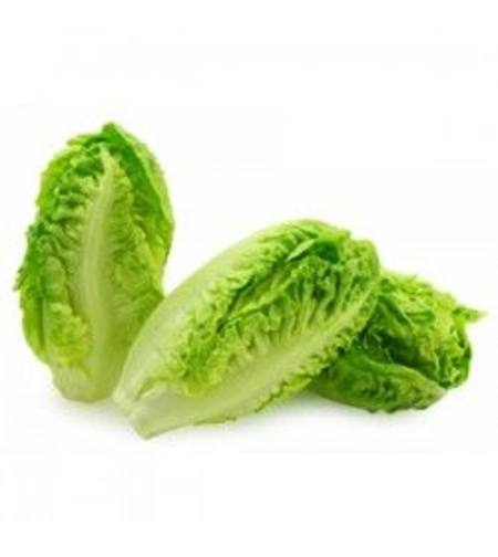 Lettuce Romaine/baby COS Each