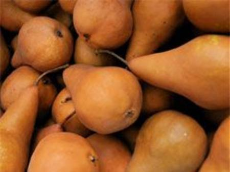 Buy Pears Bosc NZ in NZ.