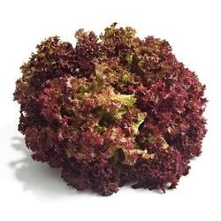 Buy Lettuce Lollo Rosso/coral in NZ New Zealand.