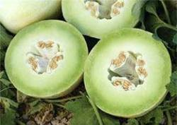 Buy Melon Honeydew Imported in NZ New Zealand.