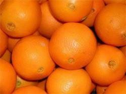 Buy Oranges Imported in NZ New Zealand.