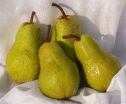 Buy Pears Green Imported in NZ New Zealand.